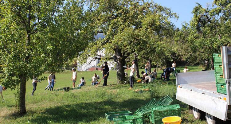 Davantage de classes ont participé aux chantiers nature du Parc Chasseral
