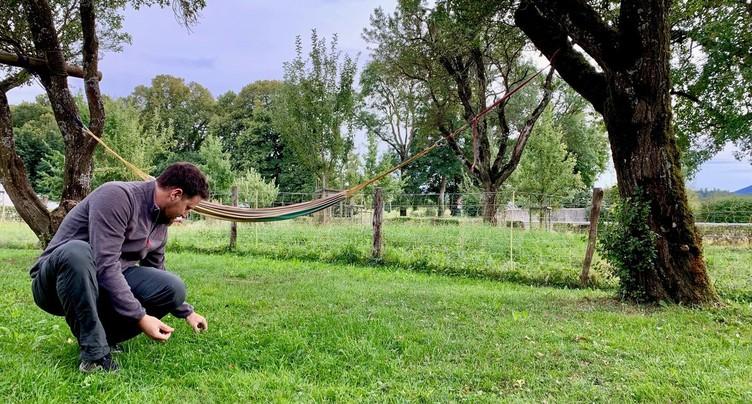 La récolte de la bérudge touche à sa fin