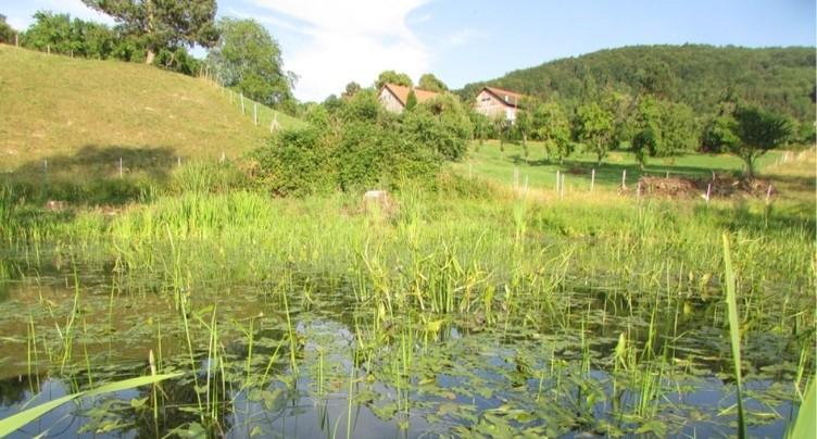 Découvrir les étangs du Martinet à Courtemautruy