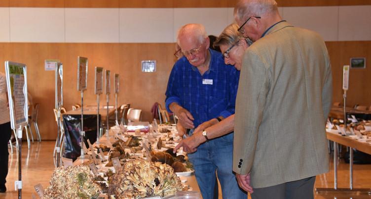 Plus de 350 espèces de champignons présentées à Tramelan