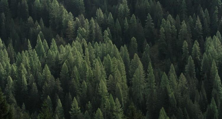 Des étudiants veulent préserver les forêts jurassiennes