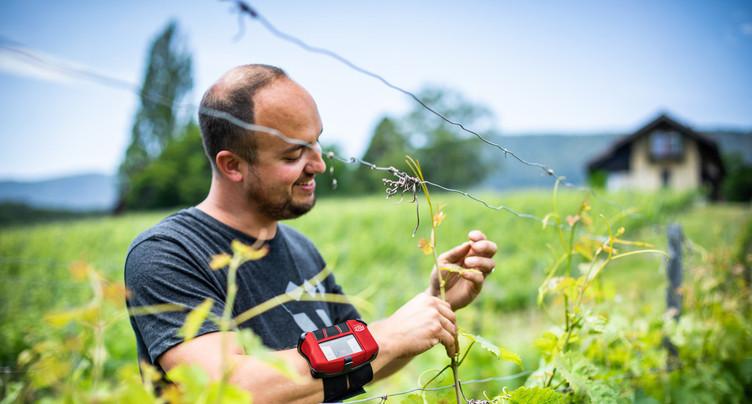 Une innovation suisse pour un vignoble connecté