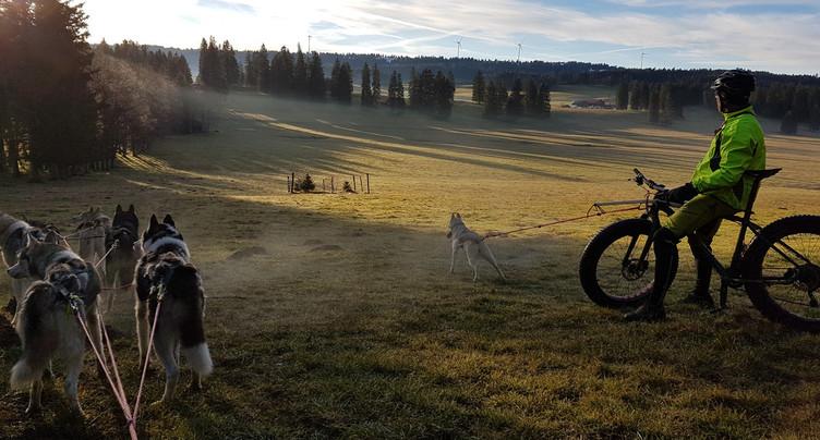 « Je m'entraîne avec » les huskies de Danièle Tock