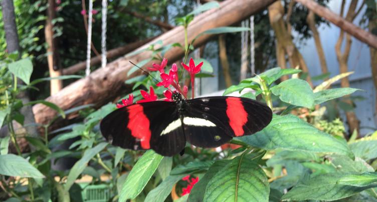 Balade au sommet de la forêt tropicale au Papiliorama