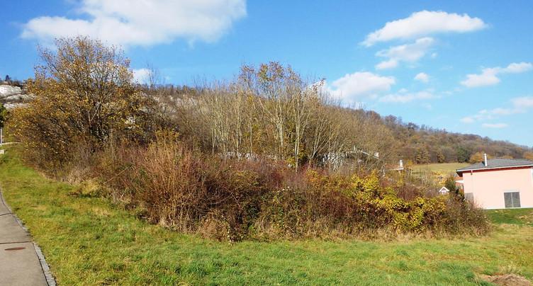 À Delémont, le bosquet de la rue du Murgier sera débroussaillé