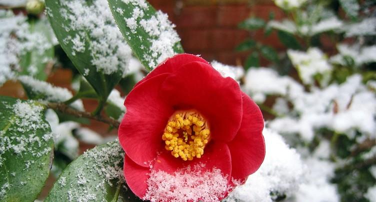 C'est l'hiver ou le printemps ?