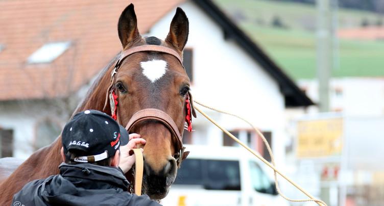 Les concours cantonaux de chevaux se dérouleront à huis clos