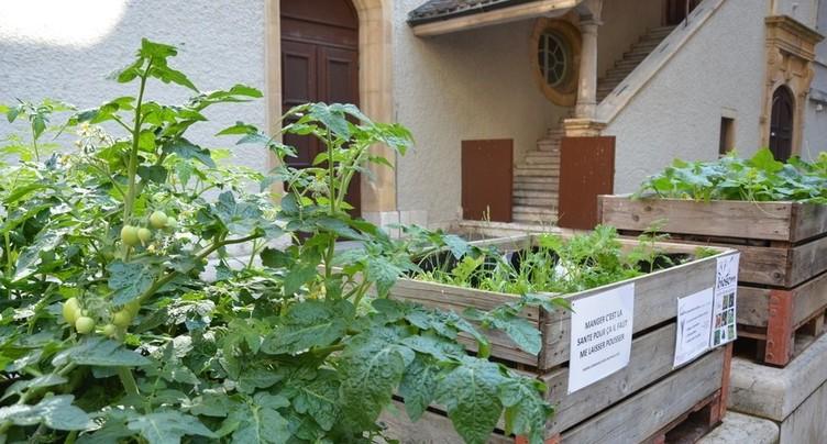 Une pétition pour autoriser la vente de semences