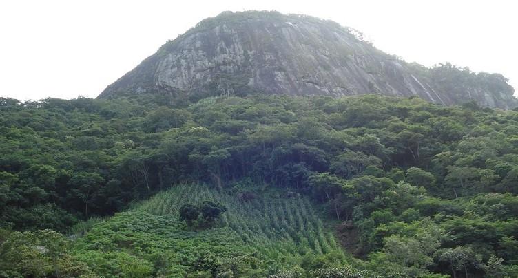 Le monde en cause : des indigènes brésiliens face à la déforestation