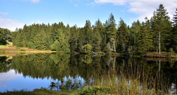Des parcomètres à l'étang de la Gruère