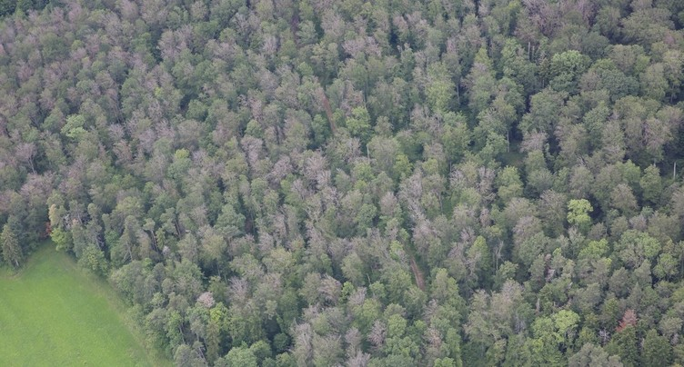 Les forêts de la Vallée dépérissent
