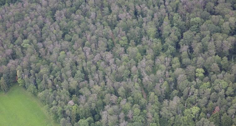 Davantage d'argent pour la biodiversité dans le Jura
