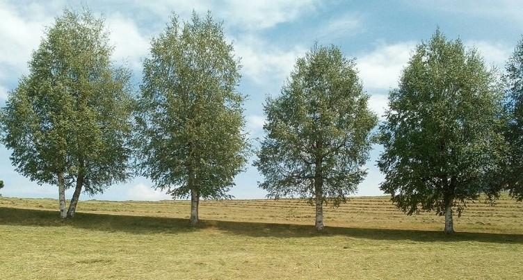 Val-de-Ruz valorise des éléments de son paysage au Parc Chasseral
