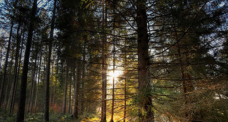 Près de 45 hectares classés en réserve forestière
