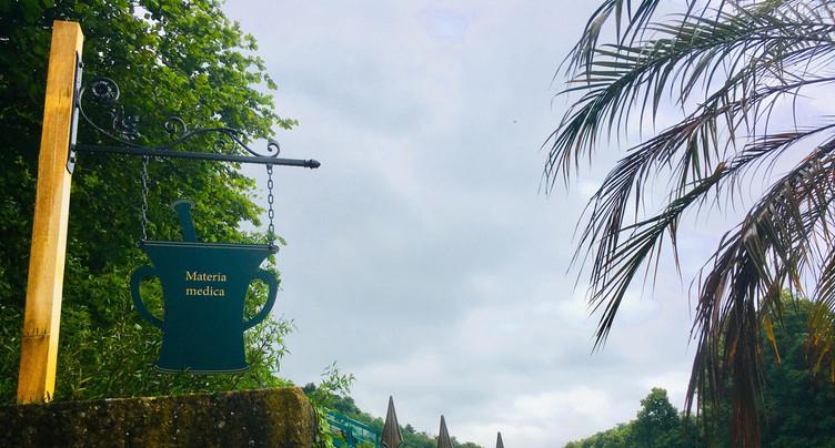 Des plantes médicinales pour la réouverture du Jardin botanique