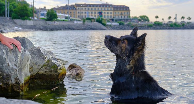 Davantage de liberté pour les chiens