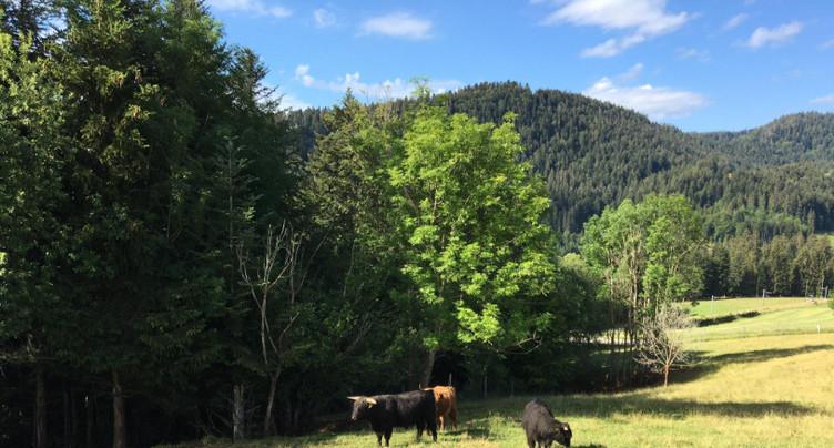 Les éleveurs pourront abattre leurs bêtes à domicile