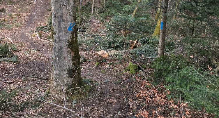 Sérénité autour de la pratique du VTT dans les forêts jurassiennes