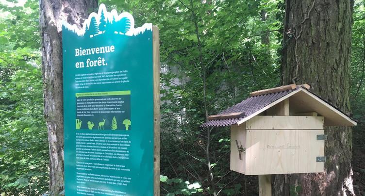 La forêt à découvrir dans sa biodiversité