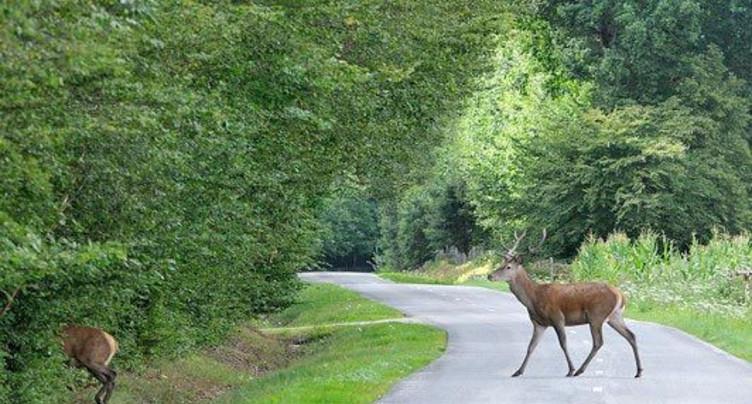 Animaux : prudence sur les routes