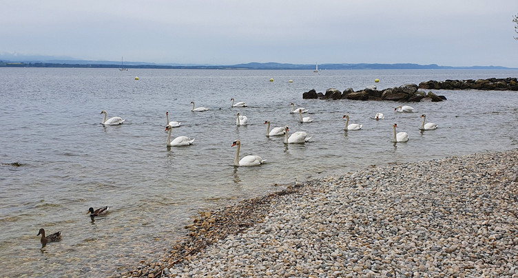 Yvonand interdit la baignade sur l'une de ses plages