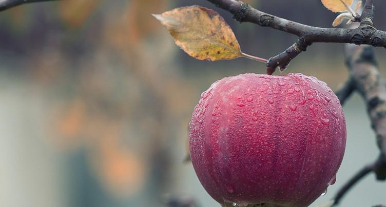 L'automne s'installe dans le potager
