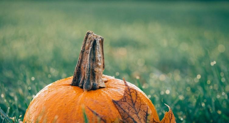 Les courges en lumière en ce week-end d'Halloween !