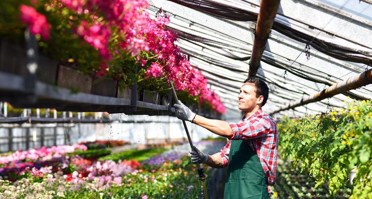 Tout savoir sur le métier d'horticulteur