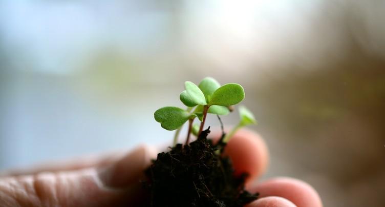 Les semis dans le viseur des Jardinières