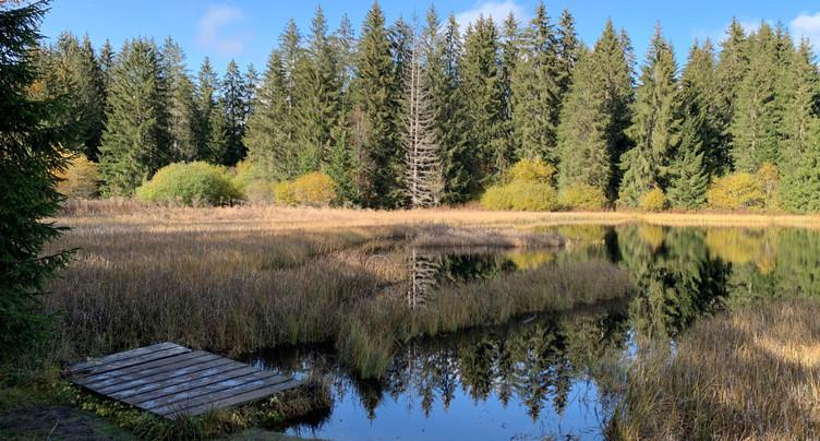 L'étang de la Gruère victime de son succès