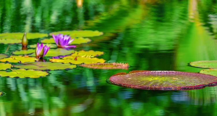 Un étang dans son jardin, c'est à la portée de tout le monde