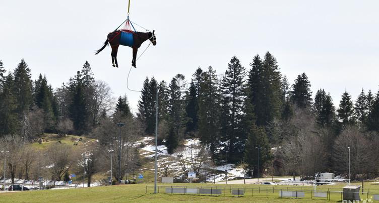 À Saignelégier, les chevaux s'envolent
