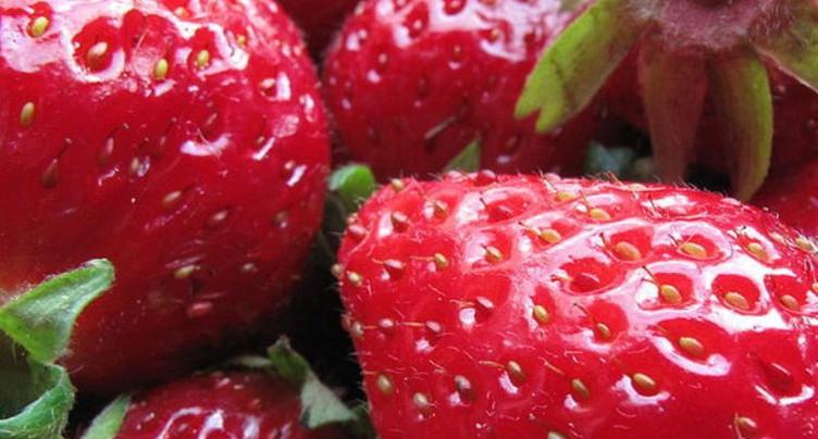 Carte blanche : la saison des fraises