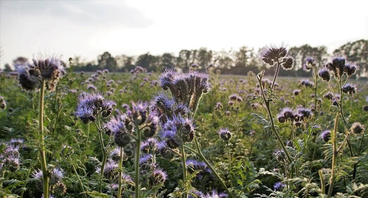 Prendre soin de ses terres avec des engrais verts