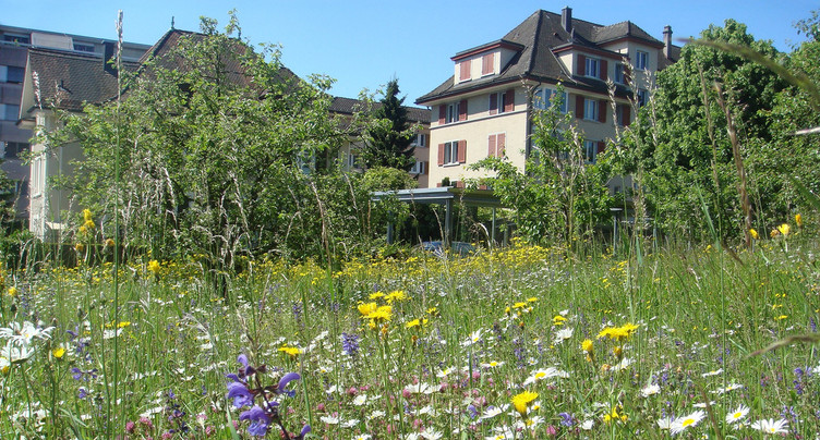 Ramener la biodiversité dans son jardin