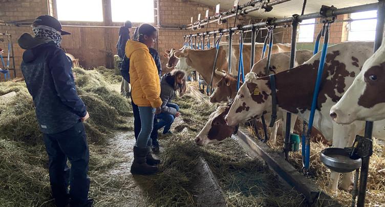 Des écoliers découvrent la vie à la ferme