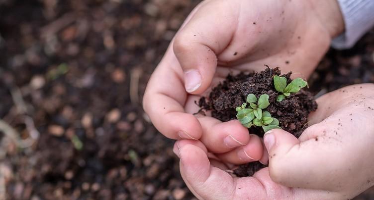 Que peut-on semer ou planter au jardin ?