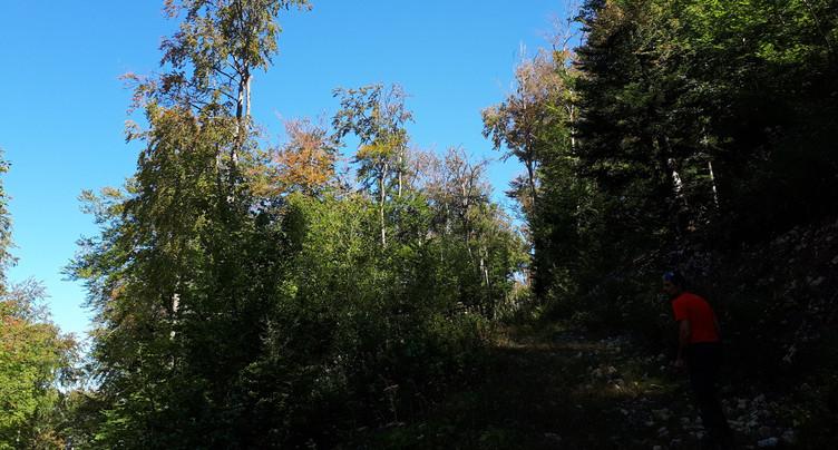 La forêt jurassienne revit grâce à la pluie