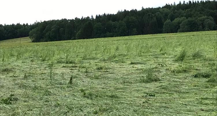 Les pâturages des Franches-Montagnes ont souffert de la grêle