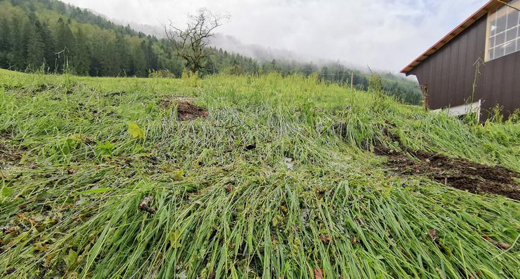 La grêle a dévasté certains pâturages du Jura bernois