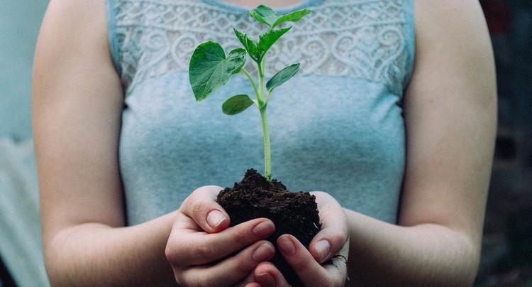 La Wyss Academy pour des solutions de développement durable