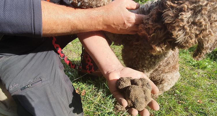 À la chasse aux truffes