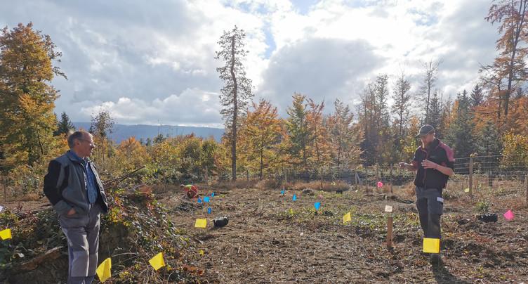 À quoi ressembleront les forêts de demain ?