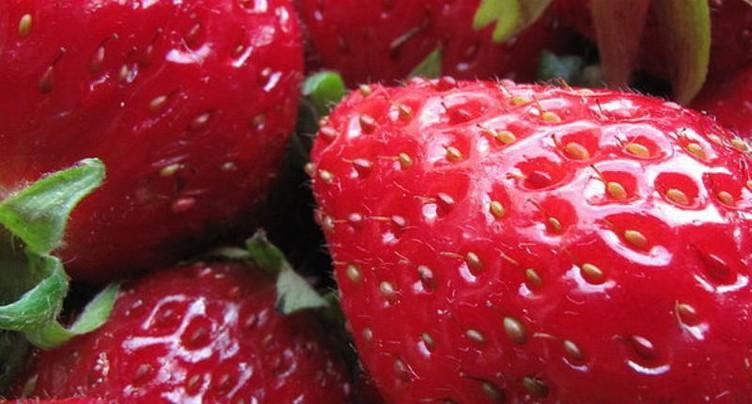 Du goudron et des plumes - les fraises