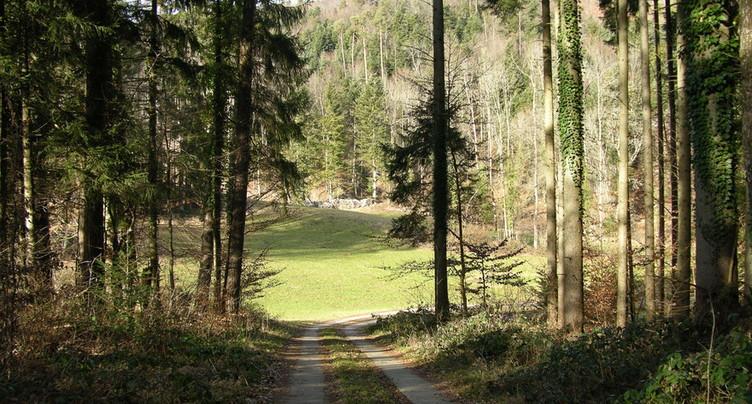 Valoriser le bois des forêts de la région