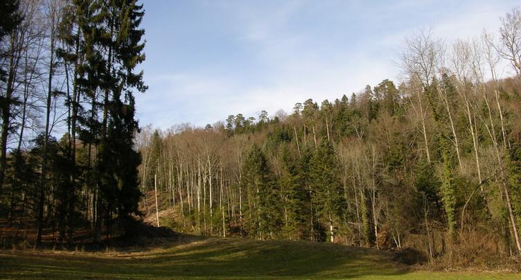 Nos forêts, terrain d'expériences