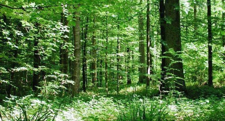Le Jura s'engage pour valoriser ses feuillus