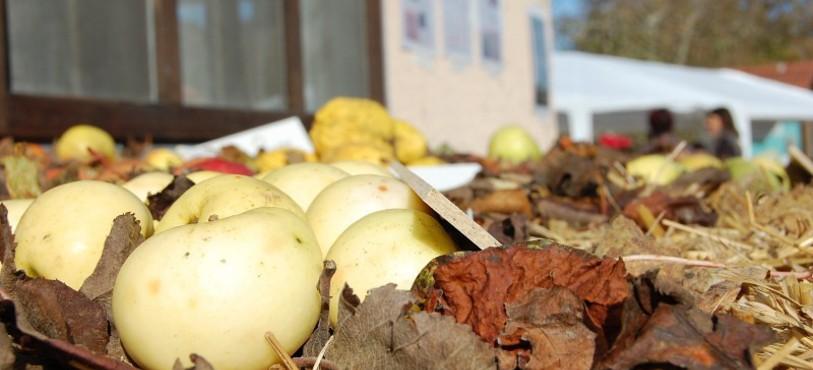 Quelques pommes d'automne.