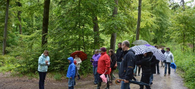 Le public à la découverte des secrets de la forêt.