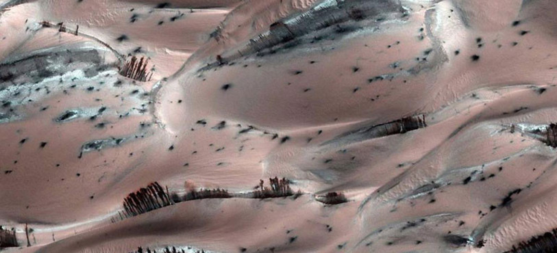 Des arbres sur Mars